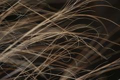 late-grasses