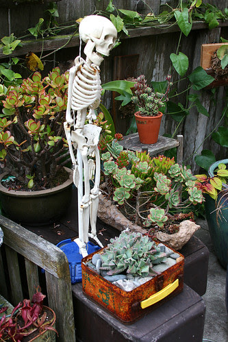 skeletons and succulents