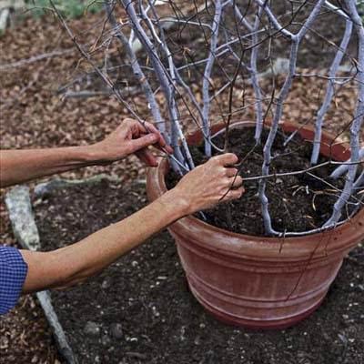 gardener inserts smaller branches in between the 4 taller branches