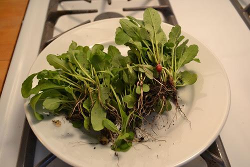 thinned arugula and radishes