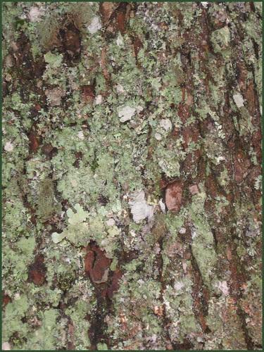 07 more moss