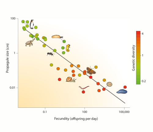 Genetic diversity and the r/K gradient in animals. The average per-day fecundity is on the x axis and the average size of eggs or juveniles is on the y axis; each dot is for a family (one to four species each). The colour scale indicates the average...