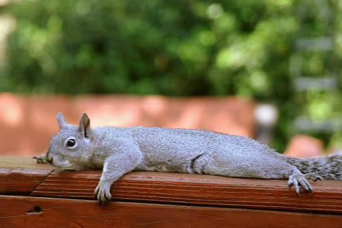 Squirrel Lounge