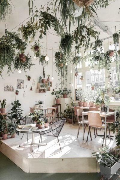 Ideas For Bedroom Living Room Indoor Plants pictures