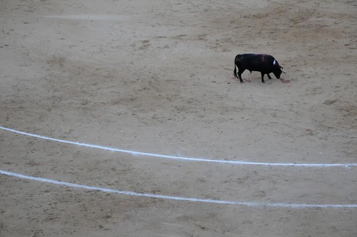bullfight_9169 web