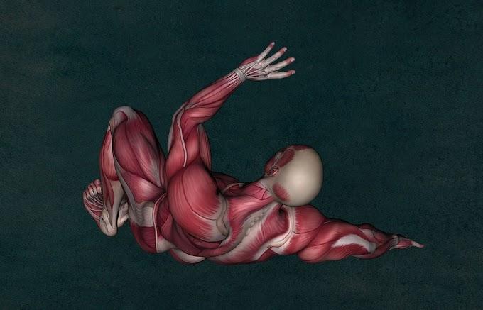 Histologia | Tecido Muscular