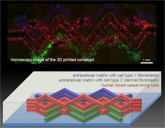 Tecido vivo vascularizado é impresso pela primeira vez