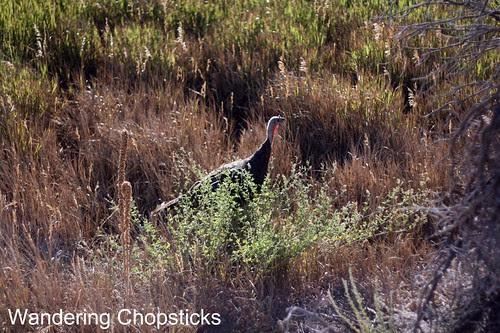 15 Petroglyph Point Trail - Mesa Verde National Park - Colorado 21