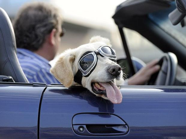 Em agosto de 2011,  o cão Mo foi visto de óculos enquanto passeava com seu dono em Gelsenkirchen , na Alemanha.  (Foto: AP)