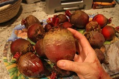 a beet in the hand