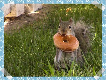 Homer Simpson squirrel