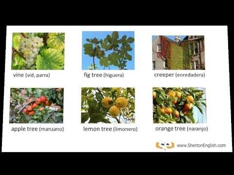 Vocabulario de ingl s rboles y plantas en ingl s for Arboles con sus nombres y caracteristicas