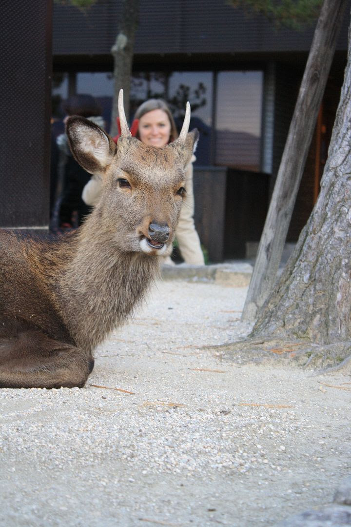 Michelle photobombing a deer in Miyajima photo 2013-12-24003603_zpse15beffa-1.jpg