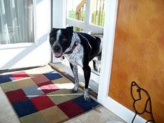 Dustee_doggydoor