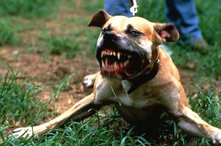 Σκύλος κατασπάραξε το πρόσωπο 17χρονης