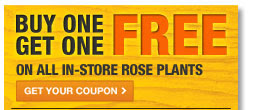 BUY ONE ROSE PLANT GET ONE FREE