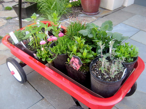 wagon plants