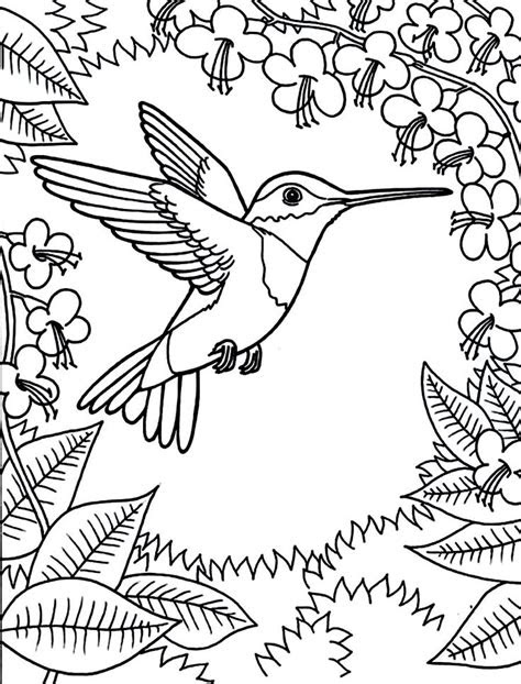 printable hummingbird coloring pages coloring animal