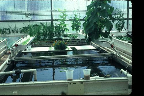 Hydroponic Systems with Fish
