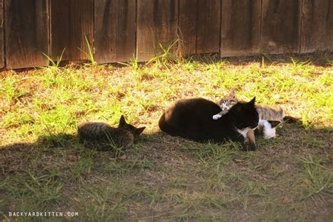 It started with a mice problem   BackyardKitten