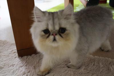 猫の部屋ブログ チュッペくん卒業