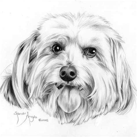 draw  dogs tongue   draw pets drawing dogs