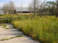 overgrown barnyard