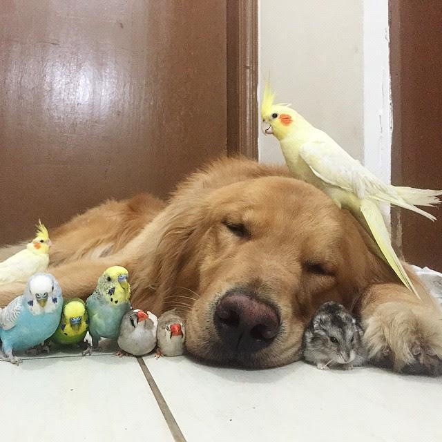 dog and birds unusual friendship