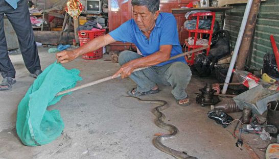 Ly Srea Kheng holds a bag containing snakes he claims were thrown into his home in Phnom Penh