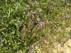 wildflowers fournes hania chania