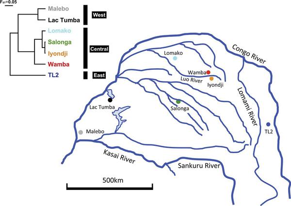 Figura 1 Área de estudio y un árbol de población.