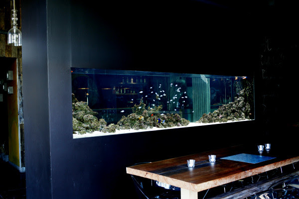 Saltwater Aquariums Adn Aquarium Design