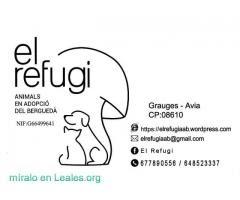 el refugi , animales en adopcion
