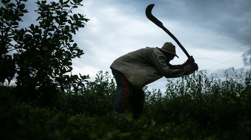 Modern-Day Slavery in Brazil