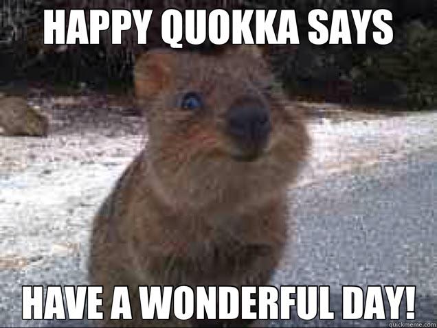Happy Quokka Says Have A Wonderful Day Quokka Quickmeme
