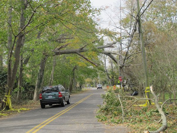 Cars passing under fallen tree lim on Beaver Dam road at Library land