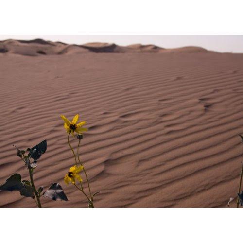 Baharda kum tepeleri