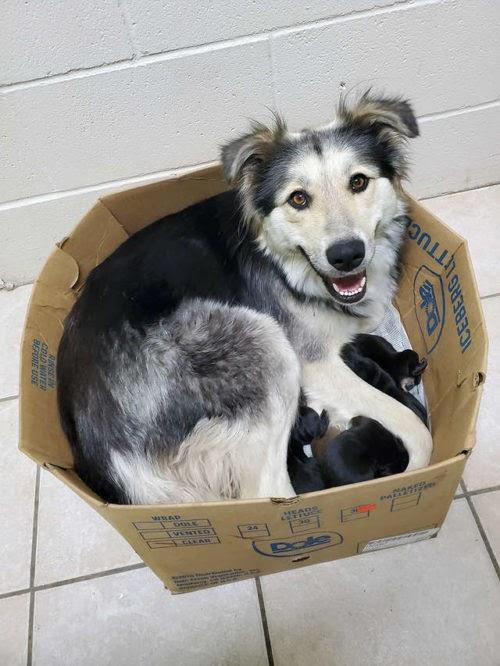 Fue hallada en un relleno sanitario dentro de una caja cerrada con sus 9 cachorros de una semana