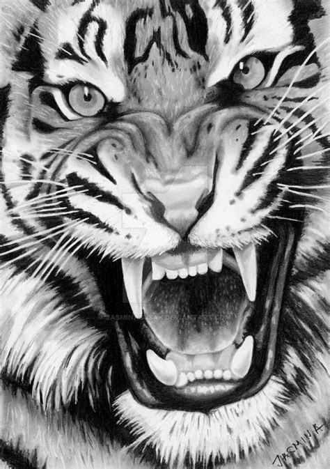 roaring tiger graphite drawing  jasminasusak  deviantart
