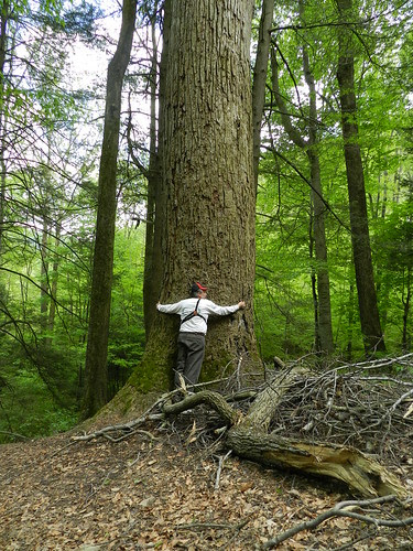 Heeter and Big Tree