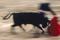 Conversacion en ingles: Corridas de toros y Derechos de Animales