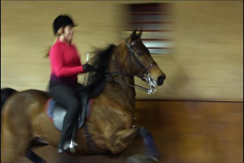 happy horse happy girl