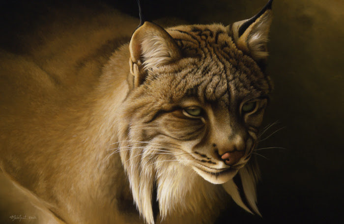 Lynx Du Canada 2005 Patrice Wolput Peinture Naturaliste