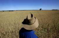 Un agricultor australiano observa el frustrado cultivo de trigo en su granja, cerca de West Wyalong. Debido al calentamiento global, los productores de arroz, trigo y otros cereales enfrentarán más desafíos en la carrera por producir alimentos, advierten científicos. Imagen de octubre de 2007