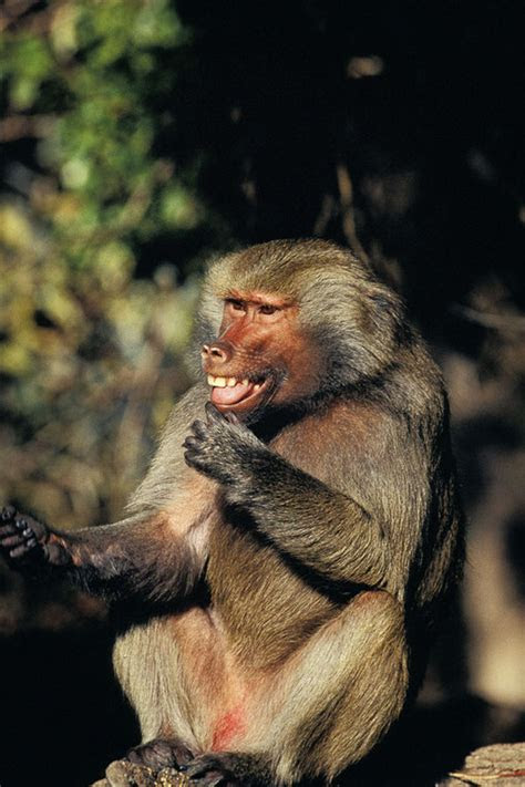 foto hewan lucu  imut  siap  menghiburmu