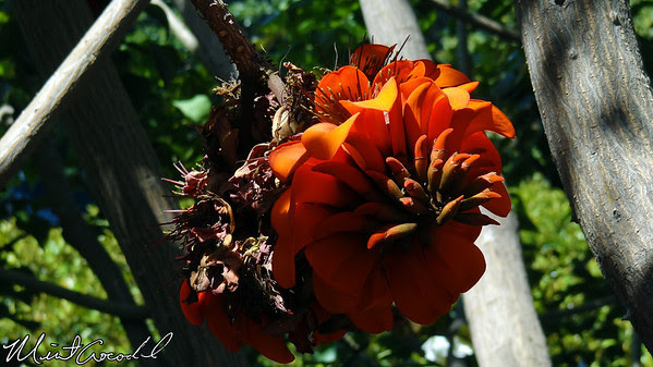 Disneyland, Flower, Tarzan Treehouse