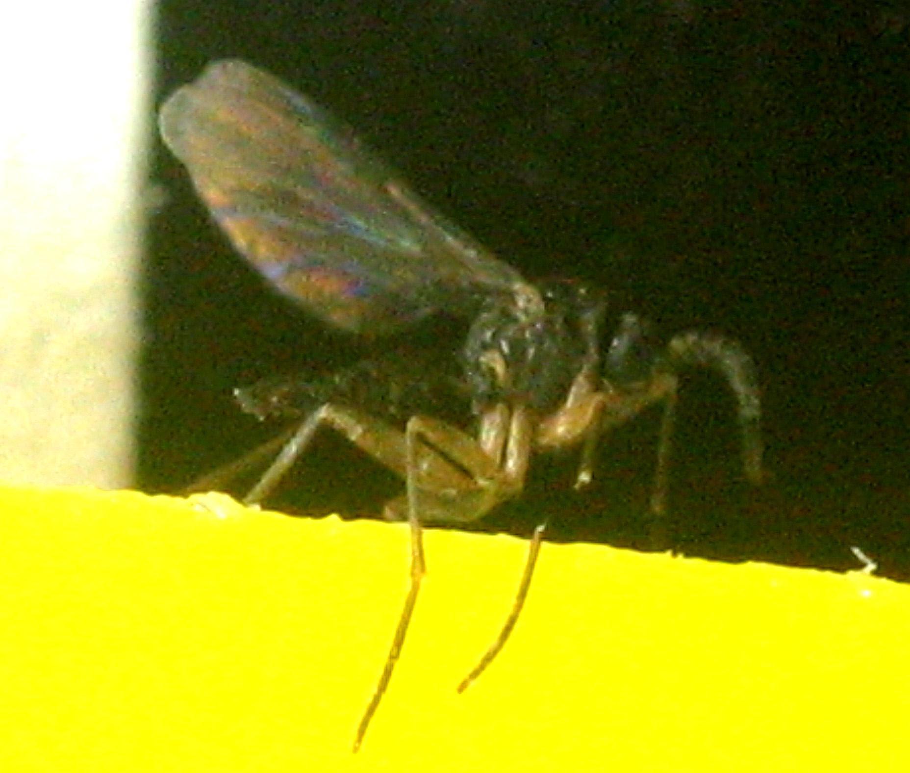 +132 Lots Of Gnats In Backyard | Outdoorhom