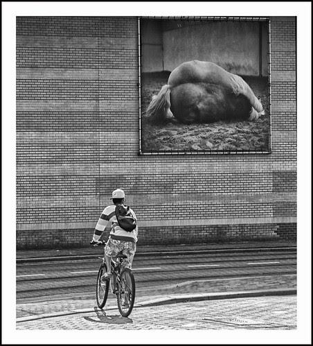op de fiets by hans van egdom