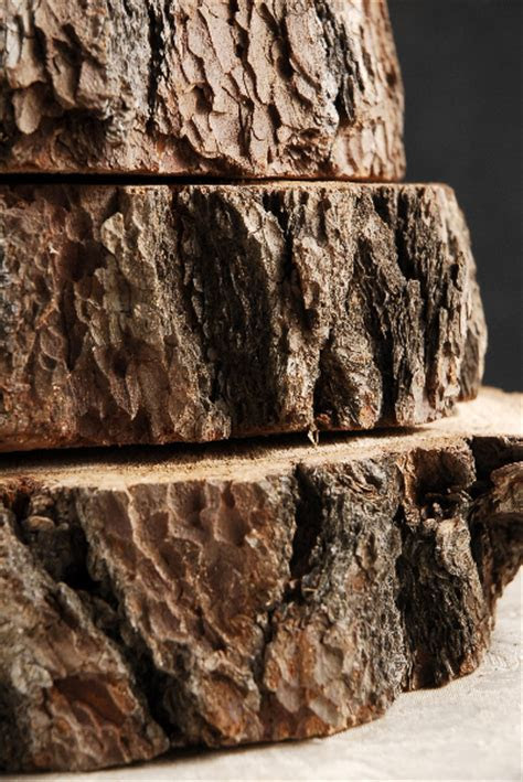 Thick Tree Slices with Bark 6 11in