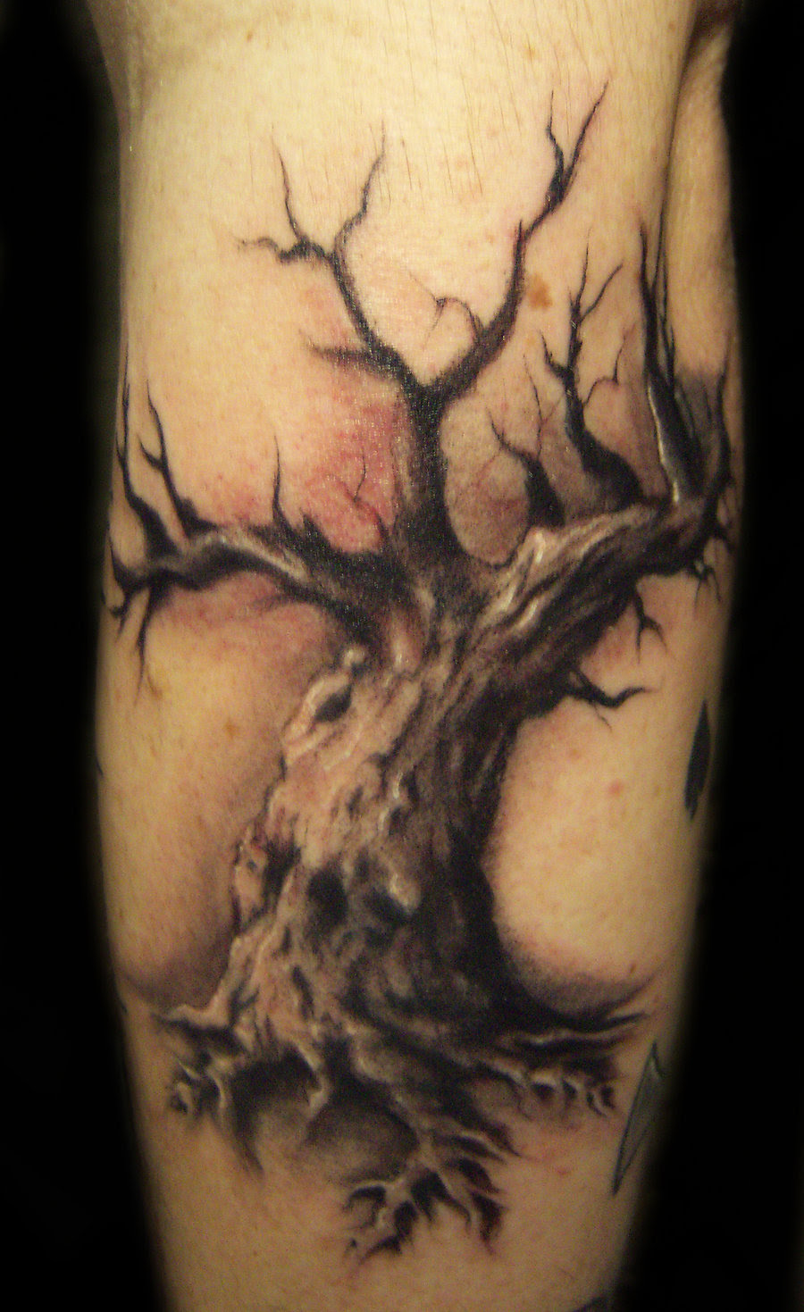 Tree Tattoo Designs Meanings Tree Tattoos Designs And Meanings 50
